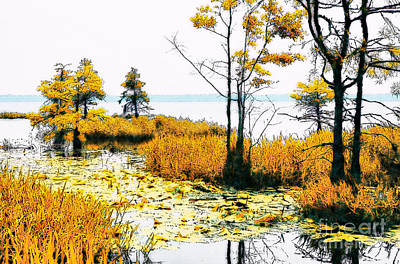 Lillypad Wonderland - North Carolina Coast II Art Print by Dan Carmichael