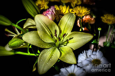 Genus Photograph - Lily by Adrian Evans