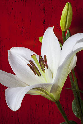 White Lily Photograph - Lily Against Red Wall by Garry Gay