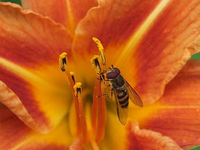 Photograph - Lily And Bee by Gene Cyr
