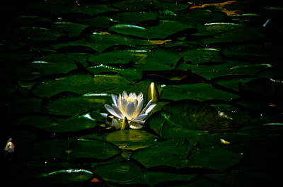 Photograph - Lily And Pads by Adria Trail