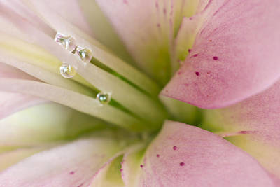 Macro Digital Art - Lily And Raindrops by Melanie Viola