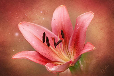Photograph - Lily by Ann Lauwers