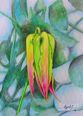 Drawing - Lily Bud On Fire by Lew Davis