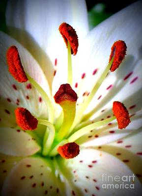Lily Center Art Print by Patti Whitten
