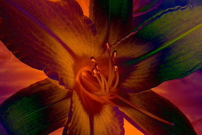 Art Print featuring the photograph Lily Colors by WB Johnston