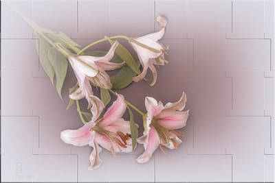 Lily Print by Elaine Teague