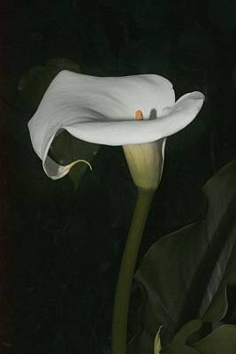 Photograph - Lily by Elery Oxford