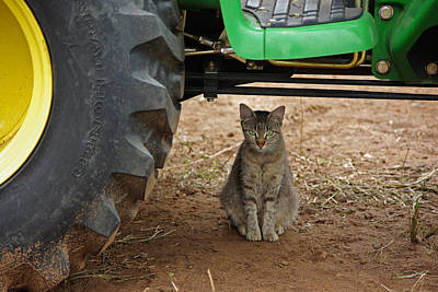 Photograph - Lily Farm Cat by Robyn Stacey