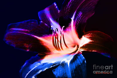 Photograph - Lily Flower Burst by Gunter Nezhoda