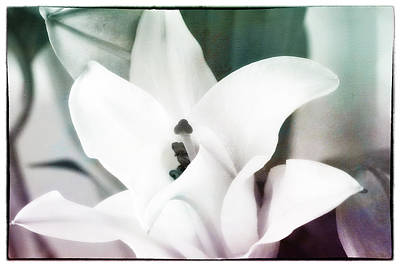 Pop Art Rights Managed Images - Lily Glorified II Royalty-Free Image by Linda Dunn