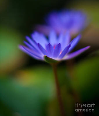 Impressionist Photograph - Lily Glow by Mike Reid