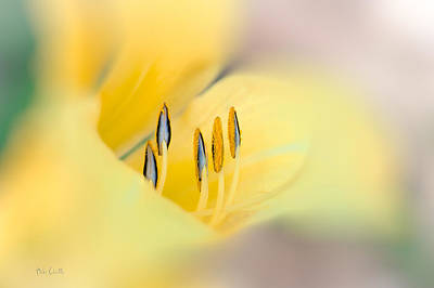 Lily Photograph - Lily Impressions by Bob Orsillo