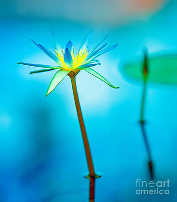 Flower Wall Art - Photograph - Lily In Blue by Bill  Robinson