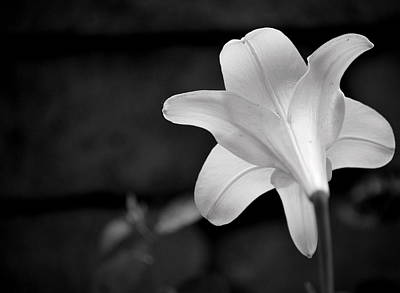 Photograph - Lily In White by Amee Cave