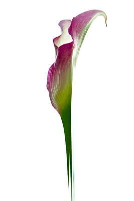 Lily Art Print by Jonathan Nguyen