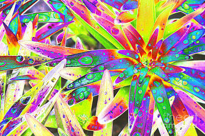 Nature Abstract Digital Art - Lily Leaves Raindrops by Carol Lynch