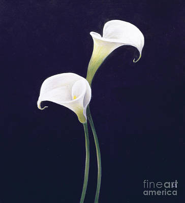 White Background Painting - Lily by Lincoln Seligman