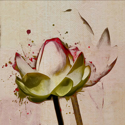 Waterlilies Digital Art - Lily My Lovely - A444csq by Variance Collections