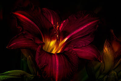 Autumn Art Photograph - Lily Number Nine by Bob Orsillo