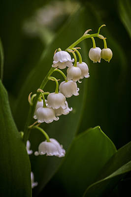 Photograph - Lily Of The Valley 2 by Wayne Meyer