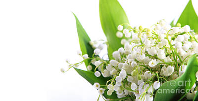 Lily Of The Valley Art Print by Boon Mee
