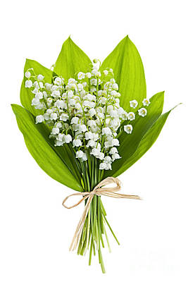 Floral Royalty-Free and Rights-Managed Images - Lily-of-the-valley bouquet by Elena Elisseeva