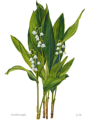 Painting - Lily Of The Valley - Convallaria Majalis by Janet  Zeh