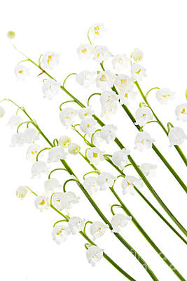 Lilies Royalty-Free and Rights-Managed Images - Lily-of-the-valley flowers by Elena Elisseeva
