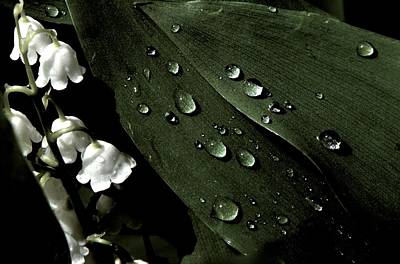 Photograph - Lily Of The Valley by Julie Grandfield