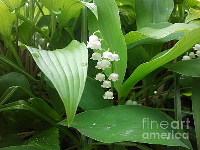 Floral Photograph - Lily Of The Valley by Julie Thorniley