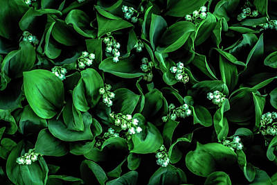 Photograph - Lily Of The Valley by Robert Clifford