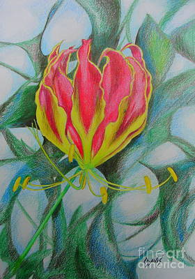 Drawing - Lily On Fire by Lew Davis