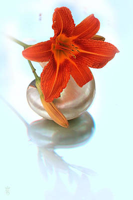 Lily On Sea Shell Original by Li   van Saathoff