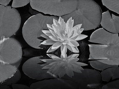 Lily On The Pond Art Print