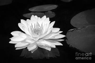 Photograph - Lily On The Water by Lori Dobbs