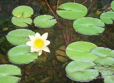 Photograph - Lily Pad Flower by Rachel Munoz Striggow