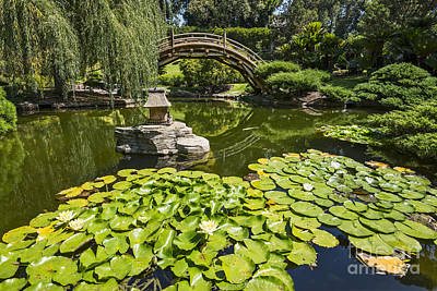 Weeping Willow Photograph - Lily Pad Garden - Japanese Garden At The Huntington Library. by Jamie Pham