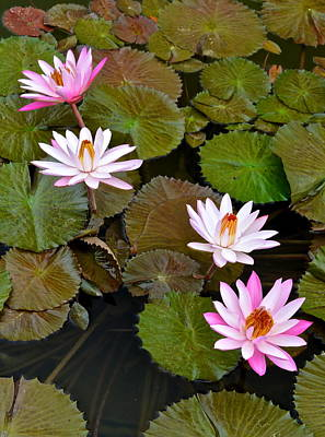 Lily Pad Haven Art Print by Frozen in Time Fine Art Photography