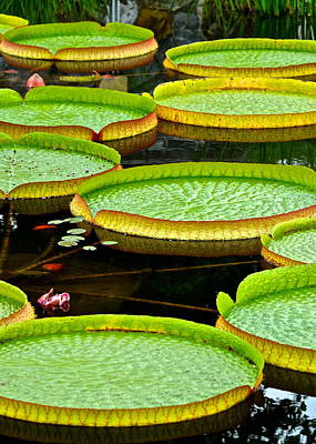 Photograph - Lily Pad Pond by Frozen in Time Fine Art Photography