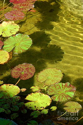 Photograph - Lily Pad Pond by Tamyra Crossley