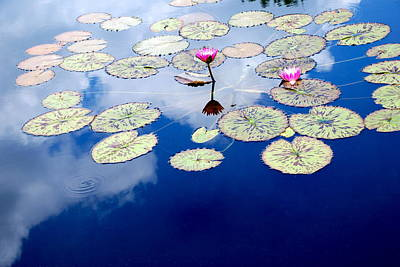 Lily Pads -  A Floating World Art Print by M E Wood
