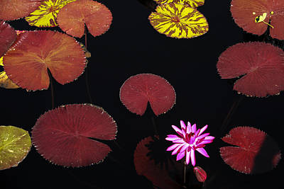 Flowers Photograph - Lily Pads by Andrew Soundarajan