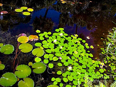 Photograph - Lily Pads by Anita Lewis