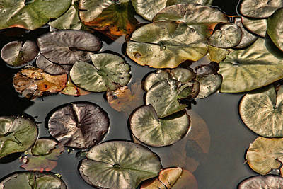Photograph - Lily Pads by Bill Kesler