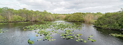 Anhinga Wall Art - Photograph - Lily Pads Floating On Water, Anhinga by Panoramic Images