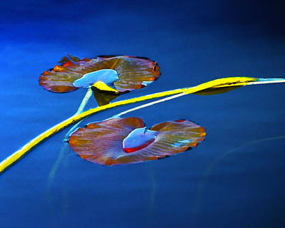Photograph - Lily Pads On Blue Water by Randall Nyhof