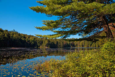 Photograph - Lily Pads On Cary Lake by David Patterson