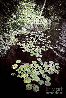 Lily Pads On Dark Water Art Print by Elena Elisseeva