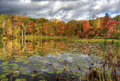 Photograph - Lily Pads On Foster Pond by At Lands End Photography